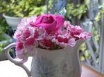つるバラとバーベナ(ピンクパフェ)