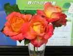 rose060617.jpg